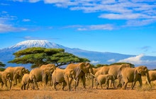 10 Things You Don't Want to Miss While Volunteering in Tanzania